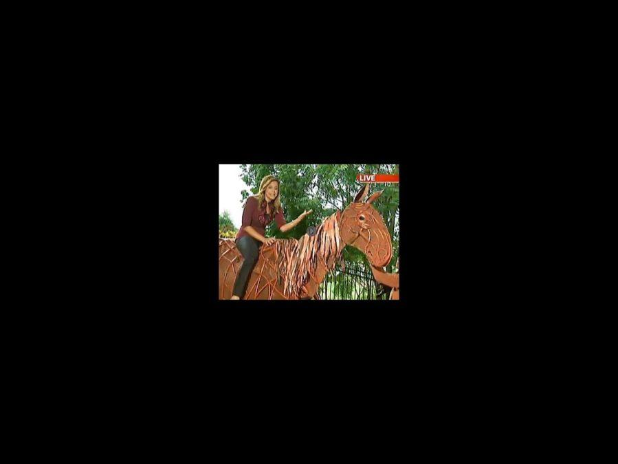 Watch It - War Horse - tour - Boston Fox News - square - 10/12